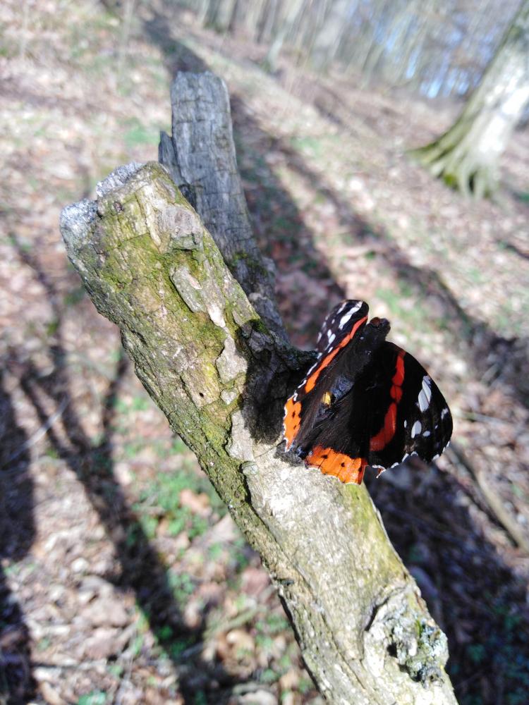 brez-metuljev-ne-bo-prave-pomladi