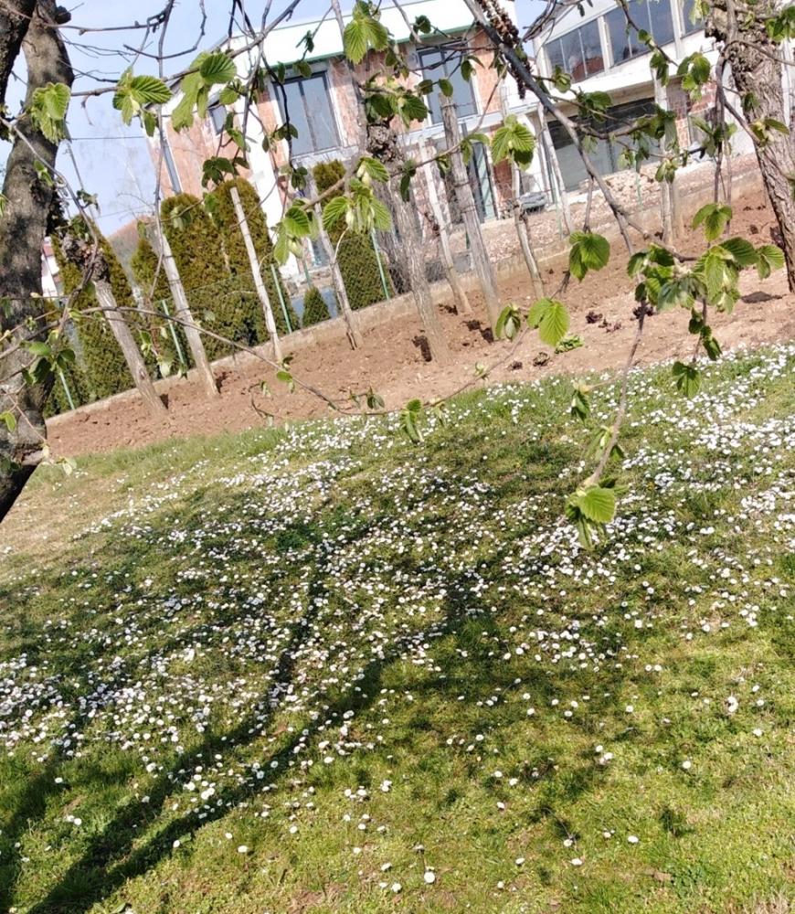 drevesna-cvetoca-senca