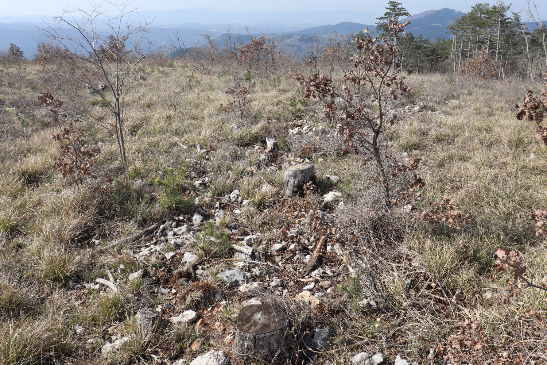 posledice-pogorelega-gozda-pri-crnoticah