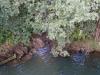 sotocje-glinka-in-vipave-z-mostu-brod-brodina_1427-450x800_0